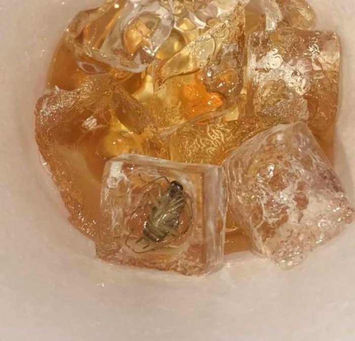 Лед с начинкой. | Фото: ScreenHumor.