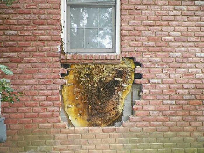 «Я всегда знала, что с этим домом что-то не так!» | Фото: Dama.bg.