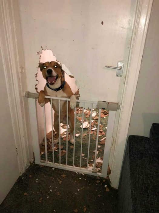 Кажется, мне досталась не собака, а бобер! | Фото: theCHIVE.