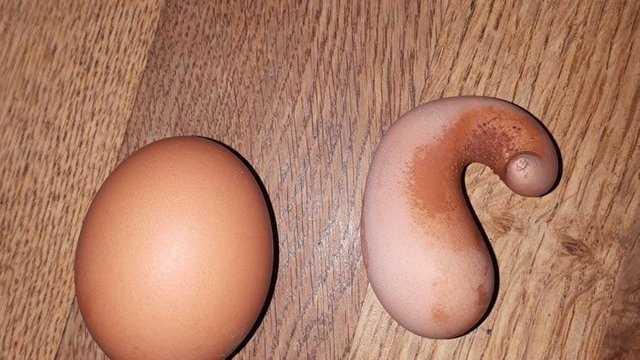 странные яйца, странные яйца которые удивили птиц которые их снесли