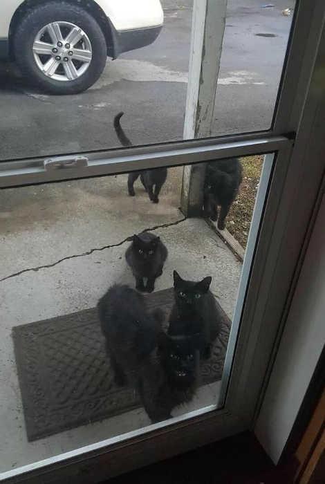 Novate.ru напоминает, черный кот - это просто суеверие. | Фото: Joe Monster.