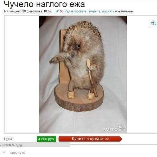 Убойные объявления с Авито, над которыми вы будете смеяться до слез-22 фото-
