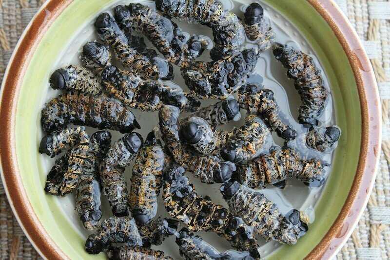 Гусеницы мопане — Африка